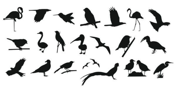 فایل کالکشن پرندگان