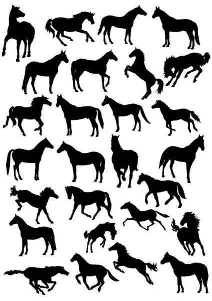 فایل کالکشن اسب