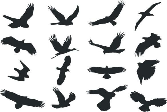 فایل کالکشن پرنده